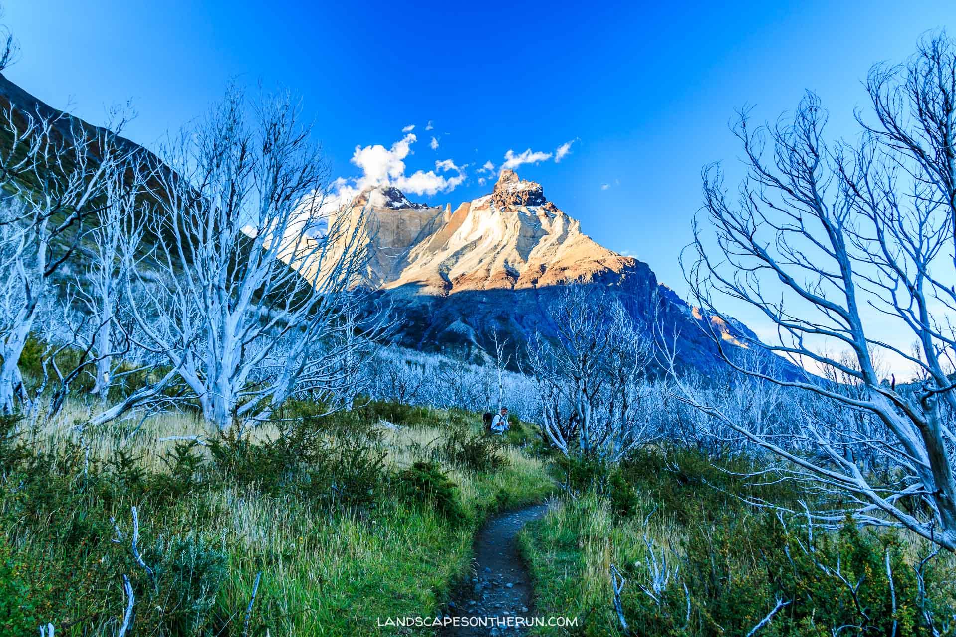 Torres Del Paine burned forest W Trek