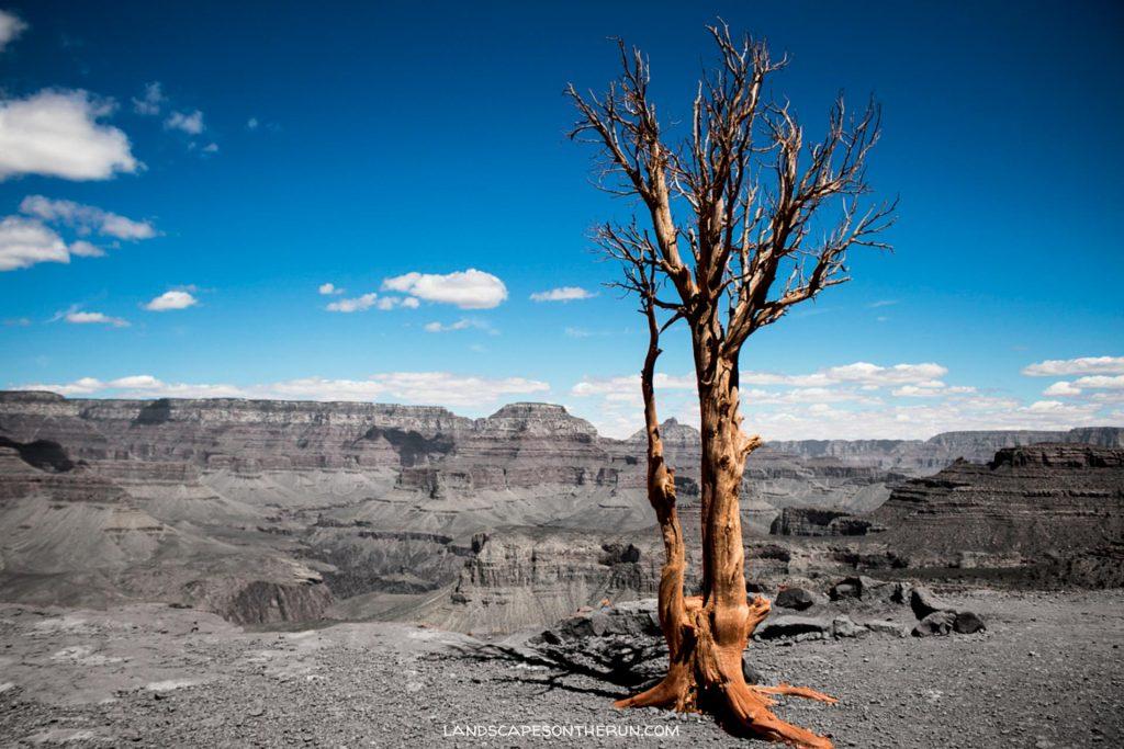 Grand Canyon Blues.jpg