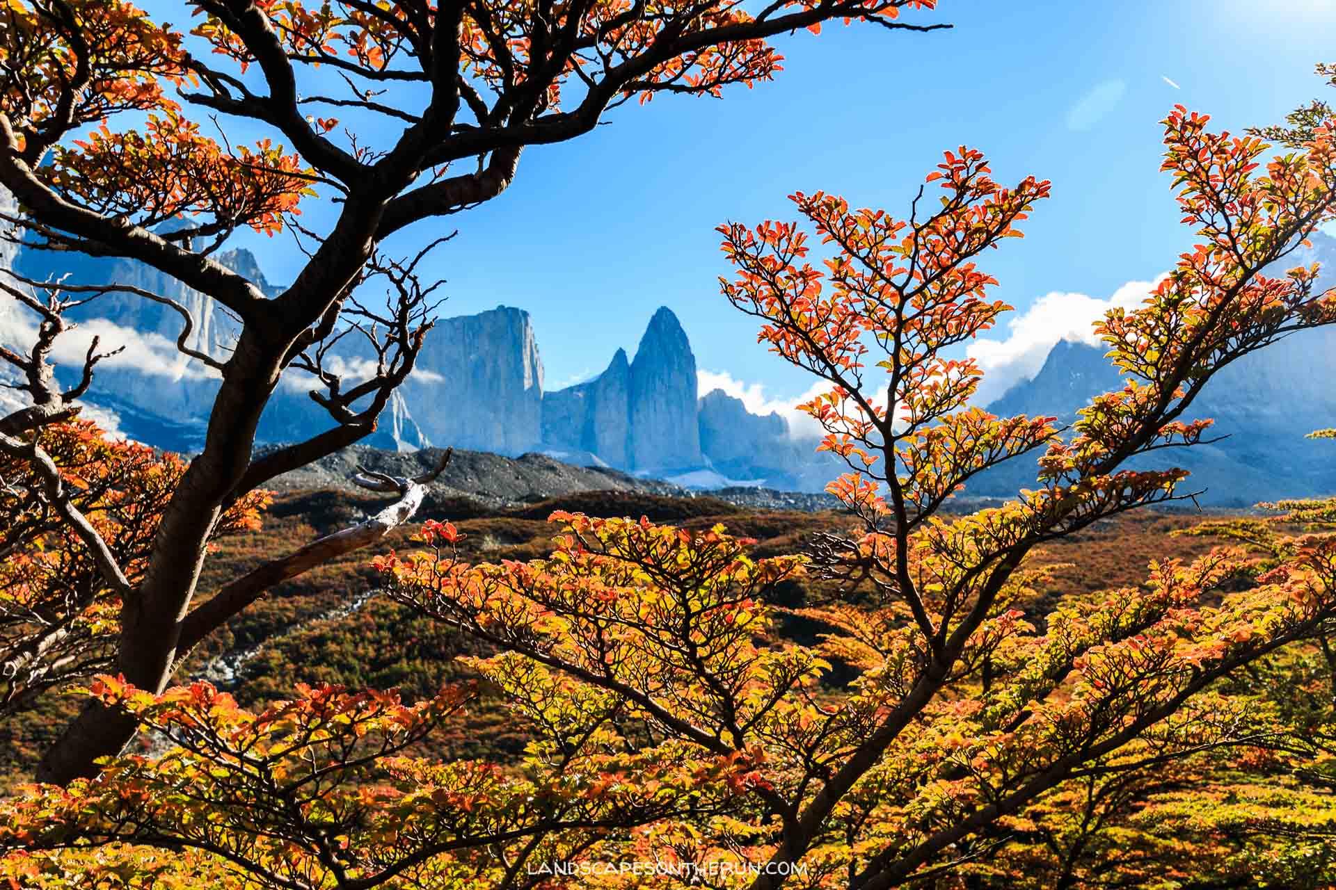 Torres Del Paine Autumn