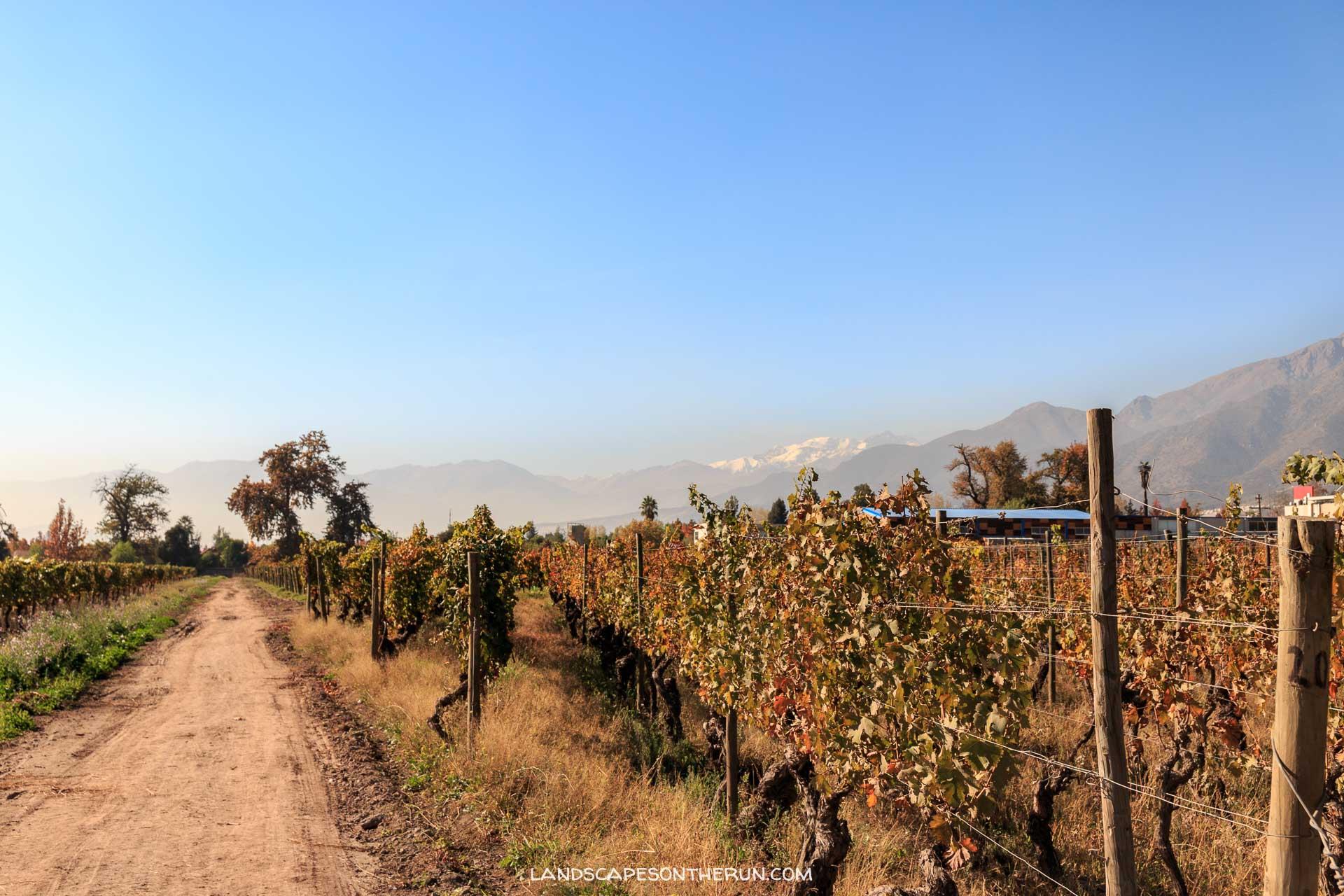 Wine and Bike tour La Bicicleta Verde Cousino Macul Vineyard and Andes