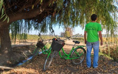 Ride Bikes & Drink Wine Sustainably in Santiago