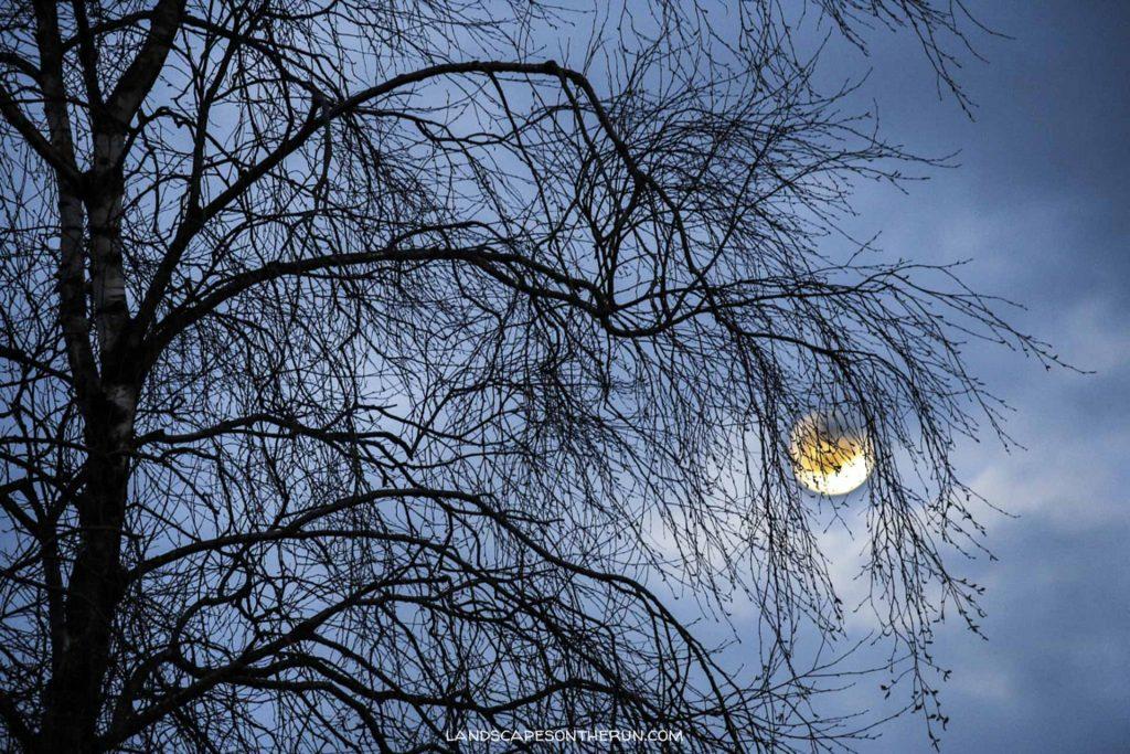 Spooky Moon Rise.jpg